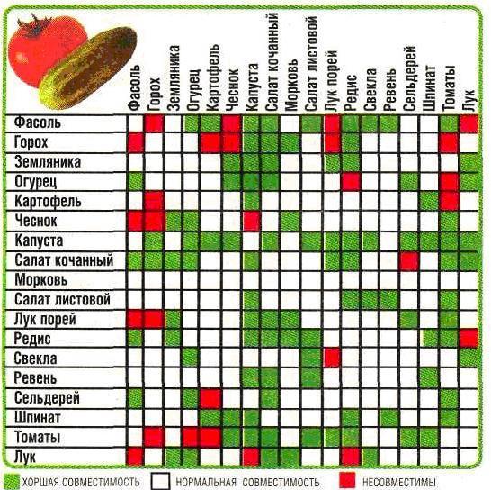 Пример несовместимости овощей