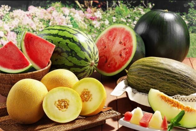 Бахчивые культуры: удобрение арбузов, дынь, тыквы и других