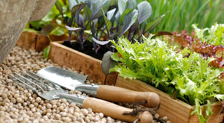 овощи и сроки посадки в апреле