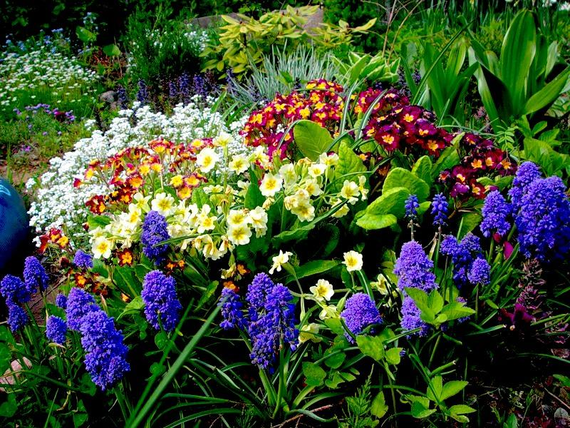 Цветы из рассады в июне