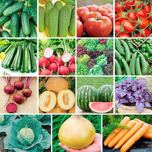 Овощи для посадки в мае