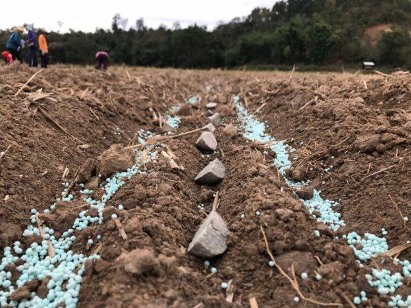 Внесение удобрений в почву до посадки