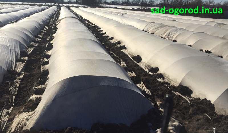 агроволокно поверх пленки с дугами