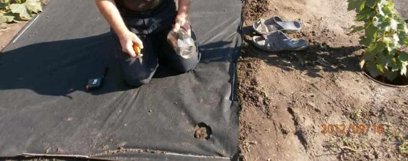 вырезали отверстие в черном агроволокно