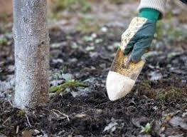 Догляд за садом після збору врожаю 333f5352e5a4d