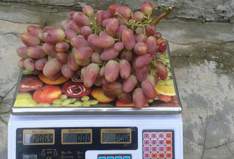 преображение мелкая гроздь 2кг